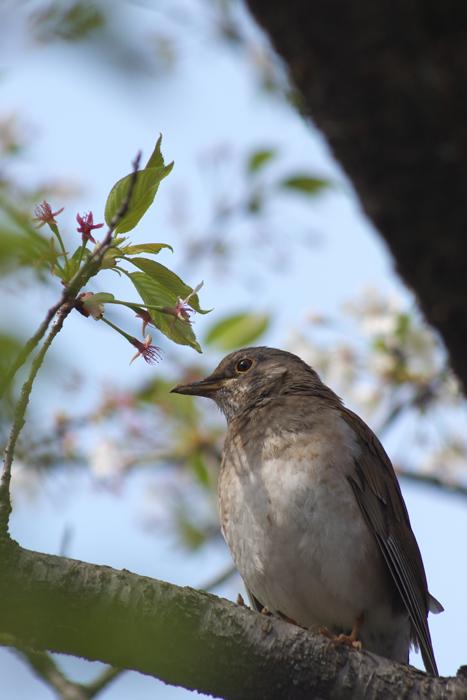 bird100404B.jpg
